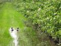Stauwasser in Fahrgassen nach heftigem Regen im Mai 2013