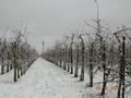 Apfelanlage im Winter